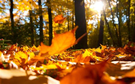 Fall Backgrounds For by Autumn Hd Widescreen Wallpapers For Laptop Ololoshenka