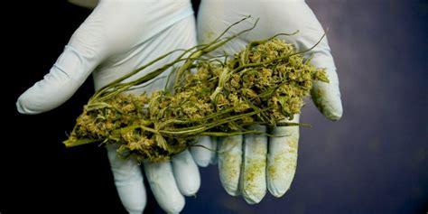 cannabis la vera storia come mai fu proibita italiano sveglia