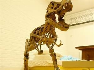 Weird  U0026 Wonderful  My T  Rex Skeleton Model And General