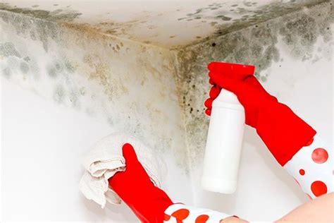 mold assessment winston salem nc double  construction