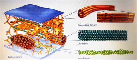 ncertunit cell  unit  life page