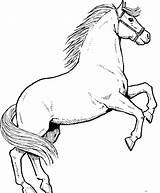 Horse Coloring Pages Drawing Drawings Conversations Classical sketch template