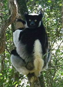 Zahamena National Park - Wikipedia