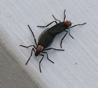 aware love bugs   kissing bugs   kiss