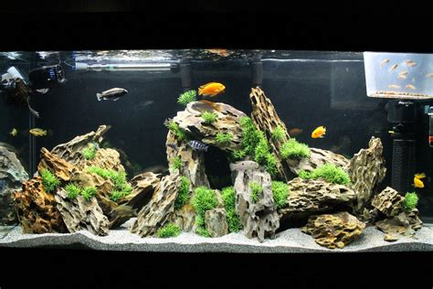 200 gallon water tank most beautiful freshwater tanks 2015 ratemyfishtank com