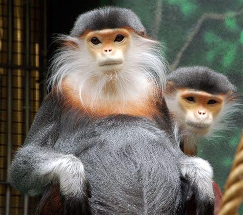 Weirdlooking Monkey Species Listoid