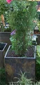 Bambus Pflanzen Kübel : bambus lexikon bambus als k belpflanze pflege pflanzgef e berwinterung ~ Frokenaadalensverden.com Haus und Dekorationen