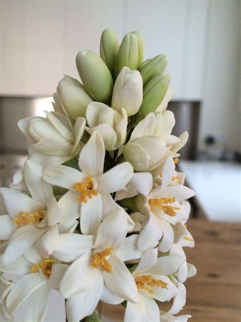 pasta di mais fiori giacinto realizzato in pasta di mais fiori in pasta di