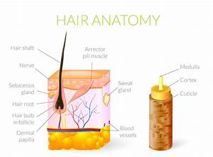 Hair Regrowth Science | What is Hair | Hair Growth Cycle