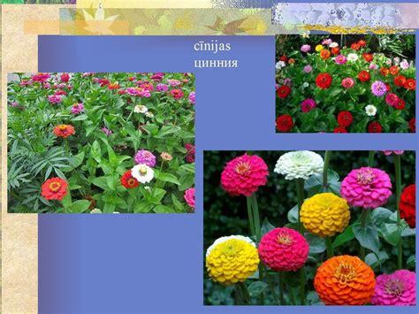 Augi vasarā - презентация онлайн
