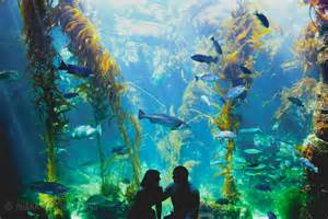 party rentals los angeles engagement session at birch aquarium by ohana