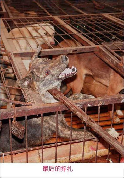 kookai si鑒e social société anti fourrure cagne sans fourrure kookaï cible numéro 1 à contacter tout l 39 été compte rendu contre kookaï