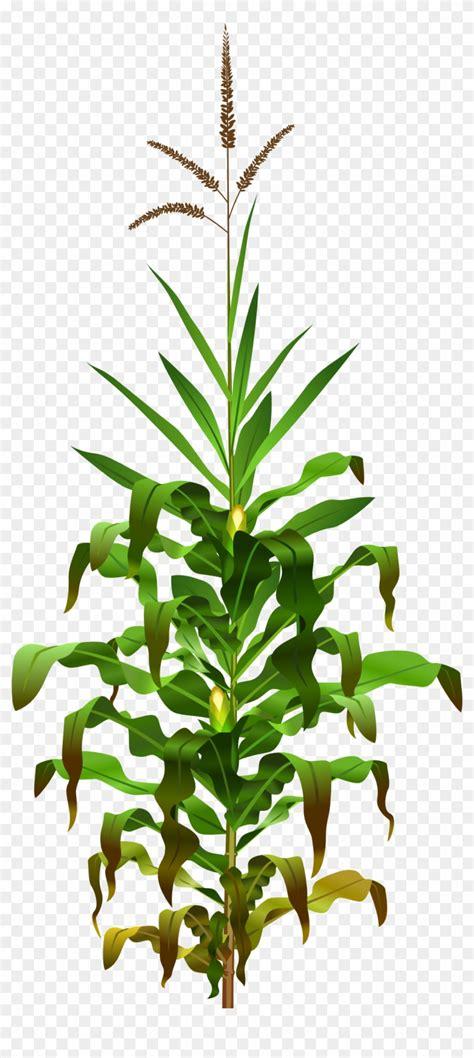 mewarnai tanaman jagung untuk meningkatkan kreatifitas balita