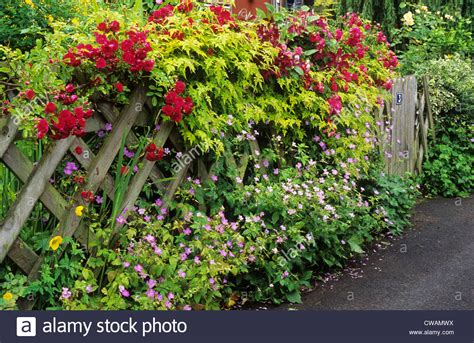 Trellis With Climbing Roses, Front Garden Picket Fence Red