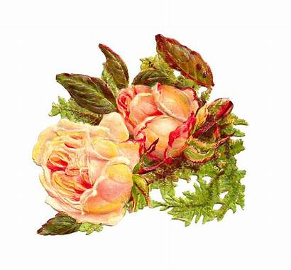 Yellow Rose Clip Digital Antique Roses Scrap