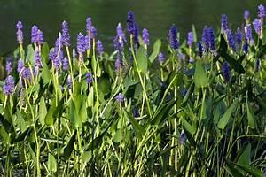 Plante Pour Bassin Extérieur : quelles plantes aquatiques choisir pour votre jardin ~ Premium-room.com Idées de Décoration