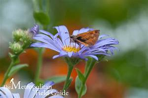 Kelly Brenner Book Review   Attracting Native Pollinators