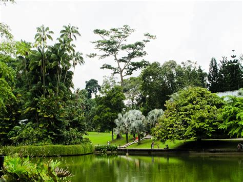 singapore botanic gardens escape from the exhausting environment with these