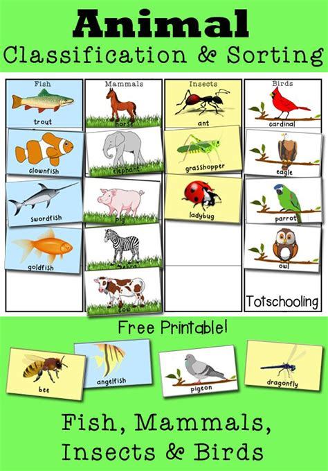 Animal Classification and Sorting Activity Animal