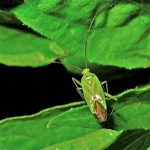 Mittel Gegen Kräuselkrankheit : insekten im garten insekten im garten janjans blog ~ Lizthompson.info Haus und Dekorationen