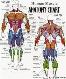 Body Muscle Groups Diagram Diagram Of Body Muscles Human