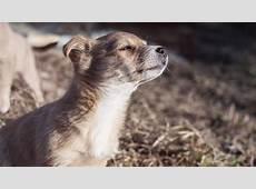 風景動物犬 wallpapersc Desktop