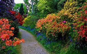 Flowery Garden Path Full HD Wallpaper and Background Image ...
