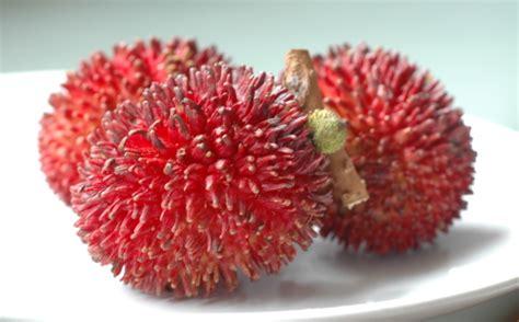 snapshots  asia tropical fruit feast pulasans