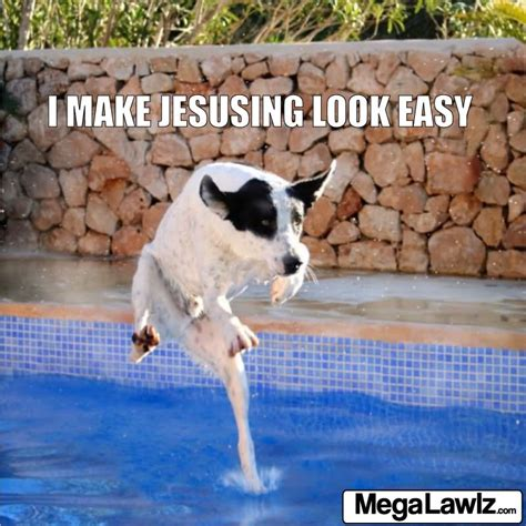 dog jumping  water funny picture