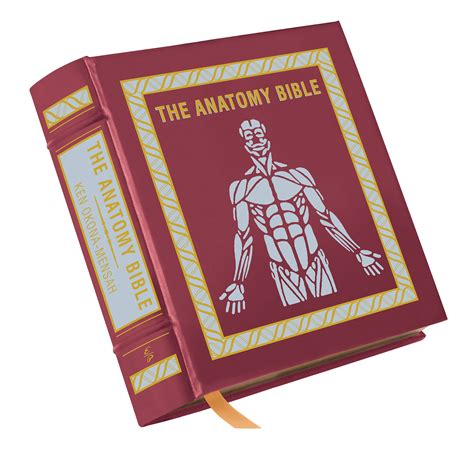 ✓ free for commercial use ✓ high quality images. THE ANATOMY BIBLE