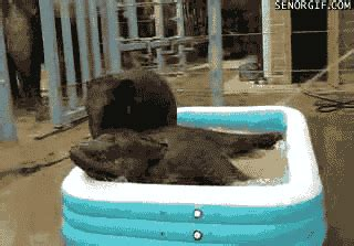 funny animal gifs part   gifs amazing creatures