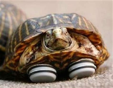 furniture slider prosthetic legs  turtle boing boing