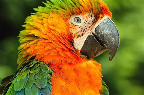 Family Kitchen Ideas - catalina macaws as pets species profile