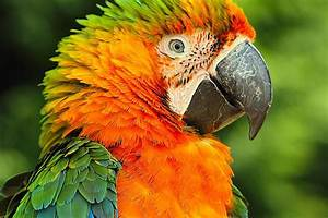Catalina Macaws as Pets - Species Profile