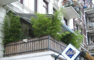 balkon sichtschutz nach maãÿ sichtschutz für den balkon garten pflanzen news green24 hilfe pflege bilder