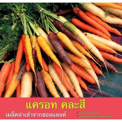 แครอท คละสี Carrot Mixed 200 Seeds พร้อมคำแนะนำการปลูก ...
