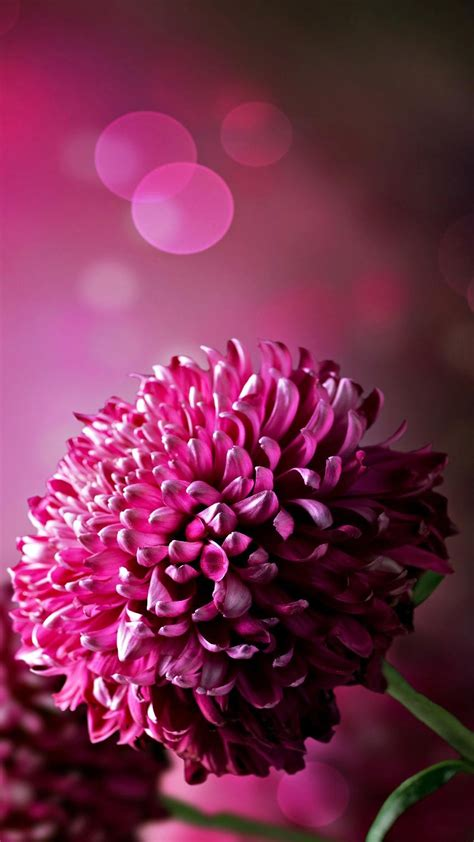Be inspired by the beauty of nature with this gorgeous collection of flower wallpapers and images. Purple Flowers Wallpaper For Phone | 2020 Cute Wallpapers