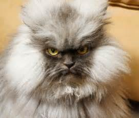 evil cats evil cats doing evil things bizarbin