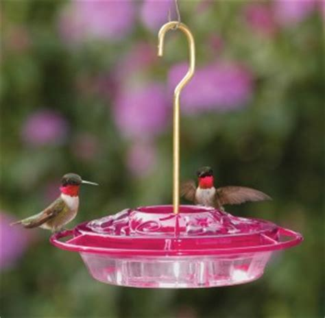 backyard bird shop locations choosing a hummingbird feeder backyard bird shop