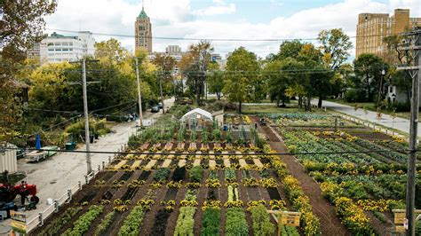 America's First Sustainable Urban Agrihood Is Growing In