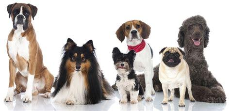 hunde op versicherung top tarife