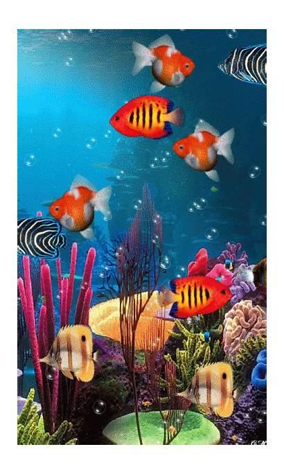 Aquarium Sea Underwater Fish Ocean Tropical Gifs