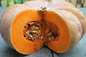 Pumpkin, Sage, Pasta