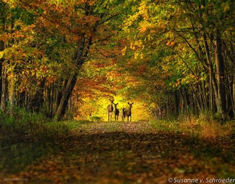 50 Beautiful Nature Photography Examples From Famous