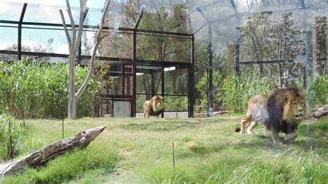 best 28 melbourne zoo christmas easter school holiday
