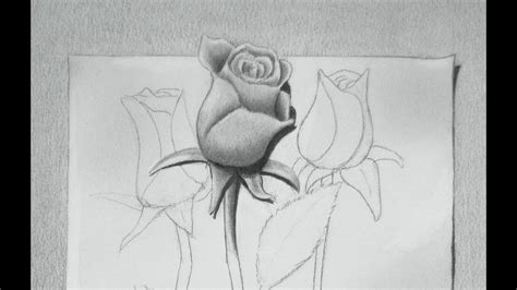 draw  rose drawing roses youtube