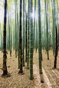 Bamboo Forest Art