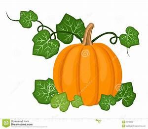 Orange Pumpkin With Leaves  Vector Illustration  Stock