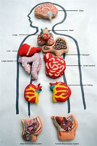 Anatomically Correct Human Organ Pastries  U0026 Chocolate Teeth