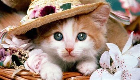 kumpulan gambar kucing yang mengemaskan photo hd kucing